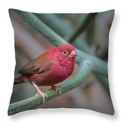 Looking Cute Throw Pillow