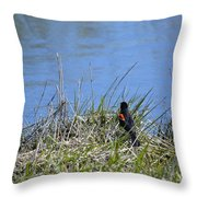 Looking For A Drink Throw Pillow