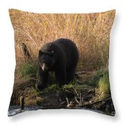 Looking For A Meal Throw Pillow