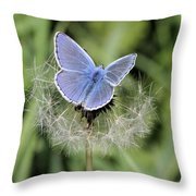 Looking For Nectar In All The Wrong Places Throw Pillow
