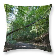 Looking For Sunlight Throw Pillow