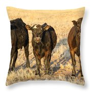 Looking For Trouble 5-3-2014 Throw Pillow