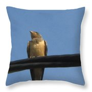 Looking In Life  Throw Pillow