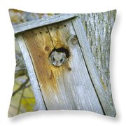 Looking Outside The Box Throw Pillow