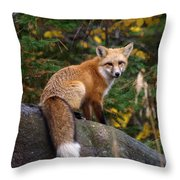 Looking Pretty Foxy Throw Pillow