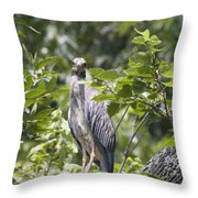 Looking Right At You Throw Pillow