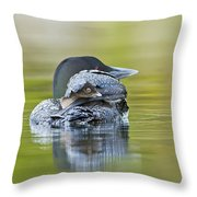Loon Chick- Feather Hat Throw Pillow