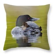 Loon Chick Resting On Parents Back Throw Pillow