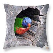 Lorikeet - Peek-a-boo Throw Pillow