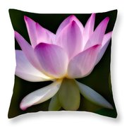 Lotus And Buds Throw Pillow by Susan Candelario