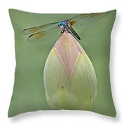 Lotus Bud And Dragonfly Throw Pillow