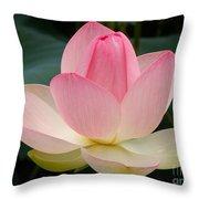 Lotus In Bloom Throw Pillow