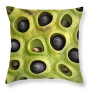 Lotus Seed Pod Throw Pillow by Karen Lindquist