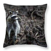 Louisiana Raccoon Throw Pillow