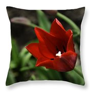 Love Tulip Time Throw Pillow