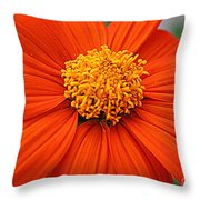 Lovely In Orange - Mexican Daisy Throw Pillow