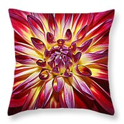 Lovely In Purple And Red - Dahlia Throw Pillow