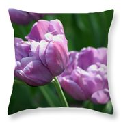 Lovely Lavender Throw Pillow