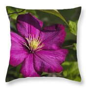 Lovely Magenta Pink Clematis Blossom Throw Pillow