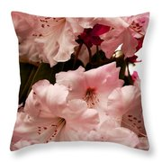 Lovely Pink Rhododendrons With Border Throw Pillow