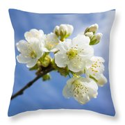 Lovely White Apple Blossoms On Branch Throw Pillow