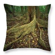 Lowland Tropical Rainforest Throw Pillow