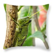 Lubber Grasshopper Squared Throw Pillow