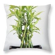 Lucky Bamboo Plant Throw Pillow