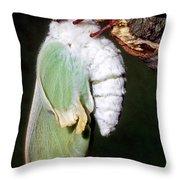 Luna Moth Actias Luna Newly Hatched Throw Pillow