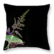 Luna Moth Astilby Black Background Throw Pillow