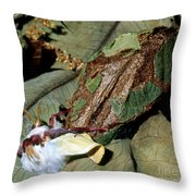 Luna Moth Emerging From Cocoon Throw Pillow