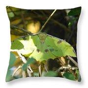 Luna Moth In The Sun Throw Pillow