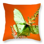 Luna Moth On Astilby Orange Back Ground Throw Pillow
