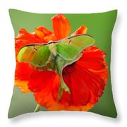 Luna Moth On Poppy Square Format Throw Pillow