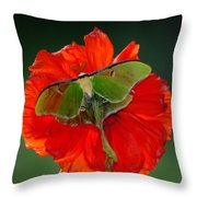 Luna Moth Orange Poppy Green Bg Throw Pillow