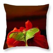 Luna Moth Poppy Evening Sky Throw Pillow