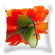 Luna Moth Poppy High Key Throw Pillow