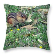 Lunch Time Photo E Throw Pillow
