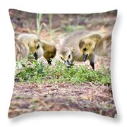 Lunchtime Explorations  Throw Pillow