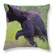 Lunging Black Bear Near Road In Grand Teton National Park-wyoming   Throw Pillow