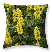 Lupin Blooms Throw Pillow