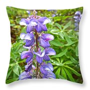 Lupine Along Trail To Rancheria Falls In Yk-canada   Throw Pillow