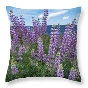 Lupine Blooms Of Bald Hills Throw Pillow