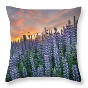 Lupine Dawn Throw Pillow