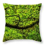 Lush Throw Pillow by Chad Dutson