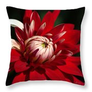 Lush Red Dahlia Throw Pillow