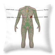 Lymphatic System In Male Anatomy Throw Pillow