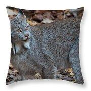 Lynx Eyes Throw Pillow