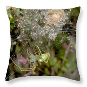 Lynx Spider And Young Throw Pillow