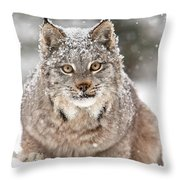 Lynx Stare Throw Pillow